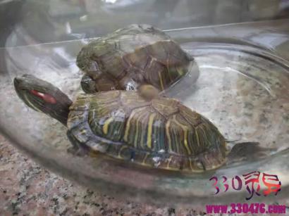 古代打井后为啥要放入两只乌龟?