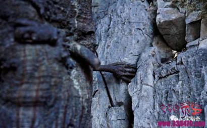 云南一棵千年菩提树腰上长出一只手,网友惊叹:太神奇了!