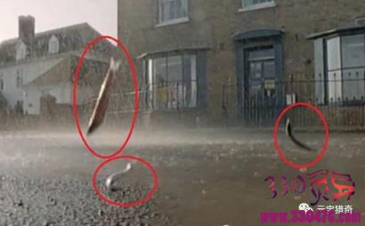 男子街头被雨点砸晕,结果这场大雨让整座城市的人兴奋!