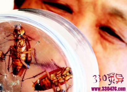 山东最大蟑螂工厂养10亿只蟑螂,王福明的蟑螂工厂每天喂50吨饭