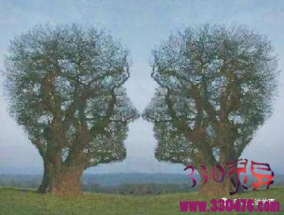 在世做不成夫妻,死后比邻安葬,坟头上长出一棵守望树