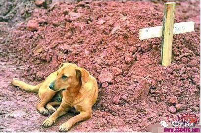 老人被儿子赶出家们,黄狗不离不弃,直到老人去世