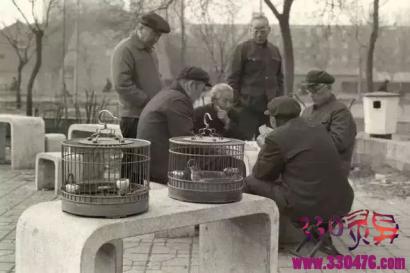 北京人都是玩物控:养鱼,养鸟,养狗,种花和斗蟋蟀...