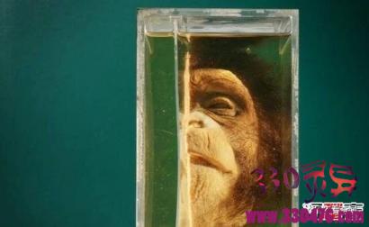 泰国恐怖博物馆,收藏畸形尸体的变态博物馆(刺激眼球)