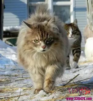 敢吸战斗民族的猫?对不起,打扰了