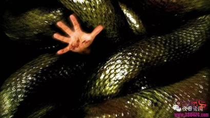 大蟒蛇劫囚渡劫化龙腾空