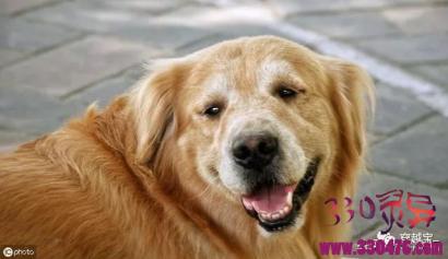 民间故事:不孝子丢下一只狗陪老娘,却不想狗真的成了娘的儿子