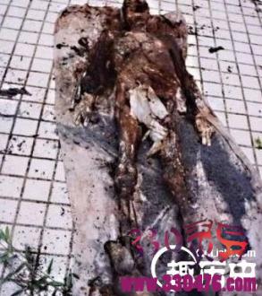 1995年成都僵尸事件,营口坠龙,上海吸血鬼,古代恐怖冥婚,林家宅37号神秘事件,猫脸老太太,北京330(375)公交车