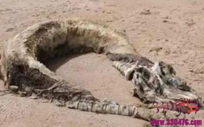 1995年安徽巨蟒渡劫事件揭秘 空中到底是龙是蟒
