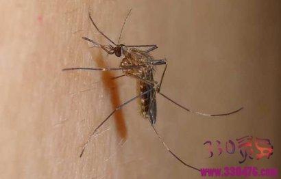 蚊子有多少颗牙齿?答案蚊子22颗牙齿