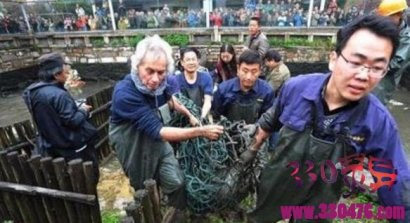 斑鳖:全球最稀有保护动物不是大熊猫而是斑鳖,世界已知存活仅剩4只,其中2只在中国