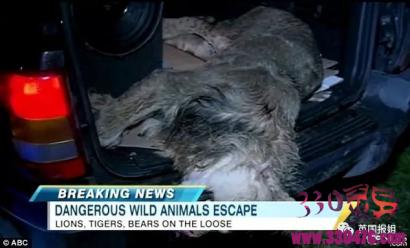 Terry Thompson养了18只老虎、17只狮子,8只熊,自杀的时候全放出来了...