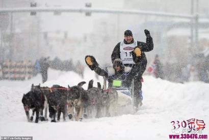 美国艾迪塔罗德狗拉雪橇比赛:伤病,死亡,抛尸野外...这些雪橇犬用生命换来人类的冠军