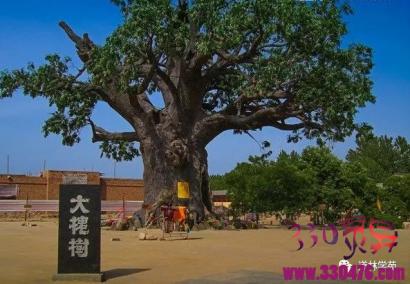山西洪洞大槐树为什么大部分中国人,都说自己的祖先来自洪洞大槐树?