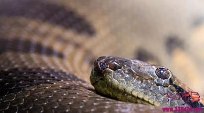蛇仙故事:杀蛇人屠蛇无数,好吃蛇肉,被万蛇缠身