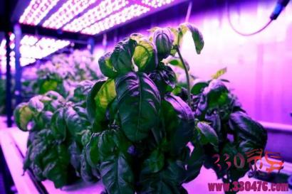 让蔬菜更好吃,麻省理工学院研究团队这次真的是运用了高科技