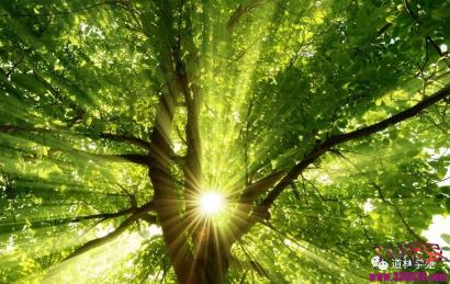 改变命运最好的方法不是外求,而是升发你的阳气 !