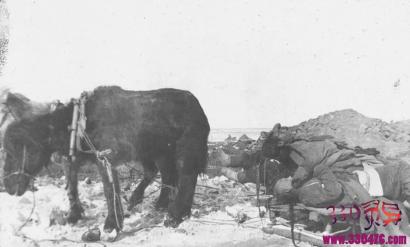 伍连德和清末1910年东北鼠疫,清末东北鼠疫带走了6万人的生命