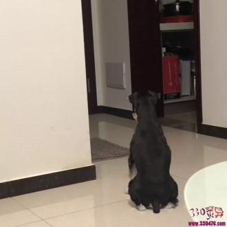 """鼠仙、犯路祭鬼魂、深夜""""有人""""敲门,狗蹲在门口看了40分钟!"""
