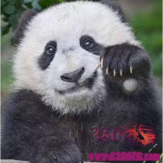 """大熊猫的食物不是竹子,是""""肉""""?"""