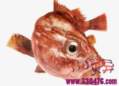 大红鱼是水鬼还是妖精?