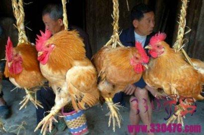 戏志才卖鸡