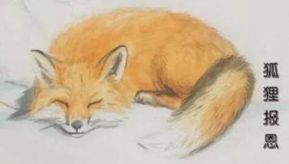 灵异故事:人有人道,狐有狐道,看狐狸报恩的故事