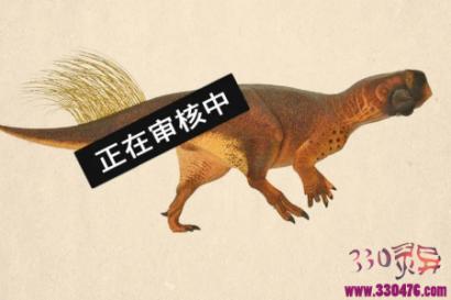 恐龙的屁眼是什么样子?