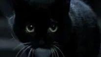 哈尔滨猫脸老太太事件